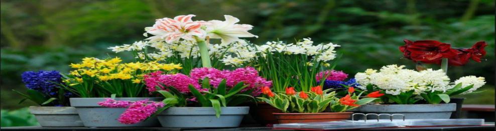 Piante e Fiori in vaso